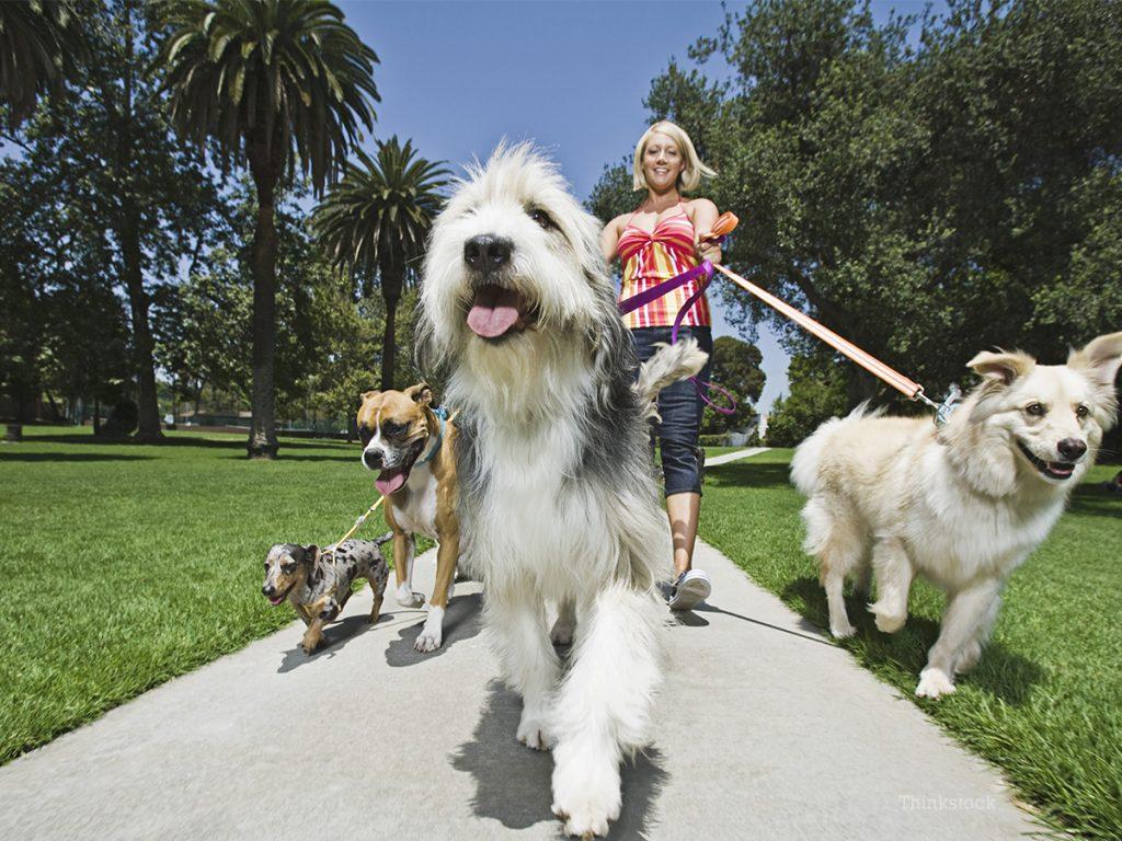 benefícios para animais de estimação